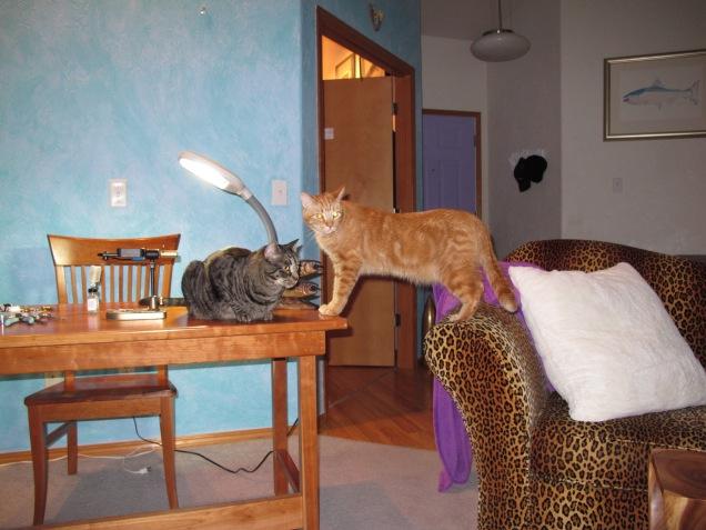 Jay Nicholas Cats prep for Video shoot 03262013