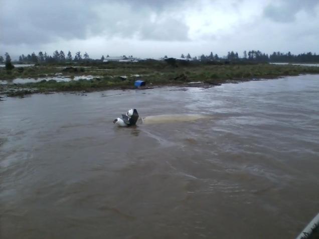 Jay Nicholas Sunk Koffler Boat a