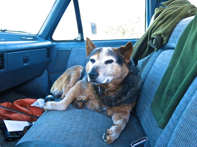 Jay Nicholas Bandit Naps in Truck