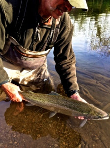 Imminent releasification of hatchery winter steelhead that responded to a swung fly in order to preserve the genetic instinct to eat the offerings of anglers fishing two hand rods ha ha.
